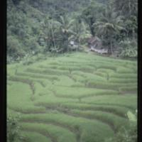 https://repository.erc.monash.edu/files/upload/Asian-Collections/Myra-Roper/indonesia-02-169.jpg