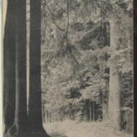 https://repository.monash.edu/files/upload/Asian-Collections/Sin-Po/ac_1941_07_05.pdf