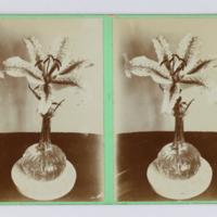 https://repository.erc.monash.edu/files/upload/Rare-Books/Stereographs/Aust-NZ/anz-110.jpg