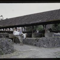 https://repository.erc.monash.edu/files/upload/Asian-Collections/Myra-Roper/indonesia-01-121.jpg