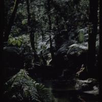 https://repository.erc.monash.edu/files/upload/Asian-Collections/Myra-Roper/newzealand-011.jpg