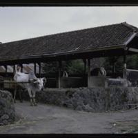 https://repository.erc.monash.edu/files/upload/Asian-Collections/Myra-Roper/indonesia-02-211.jpg
