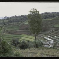 https://repository.erc.monash.edu/files/upload/Asian-Collections/Myra-Roper/indonesia-02-088.jpg