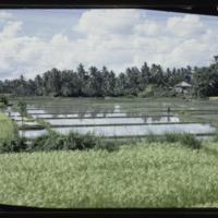 https://repository.erc.monash.edu/files/upload/Asian-Collections/Myra-Roper/indonesia-01-010.jpg