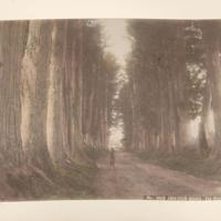 https://repository.erc.monash.edu/files/upload/Rare-Books/Japanese-Albums/jp-01-030.jpg
