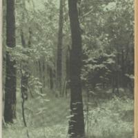 https://repository.monash.edu/files/upload/Asian-Collections/Sin-Po/ac_1941_08_30.pdf