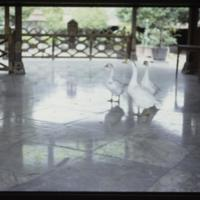 https://repository.erc.monash.edu/files/upload/Asian-Collections/Myra-Roper/indonesia-02-040.jpg