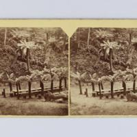 https://repository.erc.monash.edu/files/upload/Rare-Books/Stereographs/Aust-NZ/anz-081.jpg