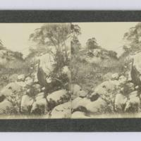 https://repository.erc.monash.edu/files/upload/Rare-Books/Stereographs/Aust-NZ/anz-094.jpg