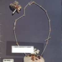 https://repository.monash.edu/files/upload/Caulfield-Collection/art-catalogues/ada-exhib_catalogues-865.pdf
