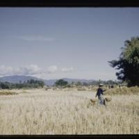https://repository.erc.monash.edu/files/upload/Asian-Collections/Myra-Roper/thailand-02-193.jpg