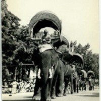 Royal elephants in procession