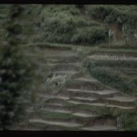 https://repository.erc.monash.edu/files/upload/Asian-Collections/Myra-Roper/indonesia-02-170.jpg