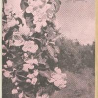 ac_1941_08_02.pdf