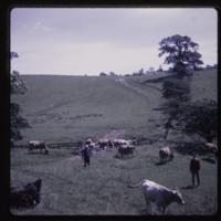 https://repository.erc.monash.edu/files/upload/Asian-Collections/Myra-Roper/newzealand-005.jpg