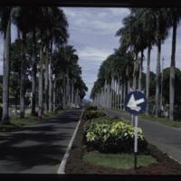 https://repository.erc.monash.edu/files/upload/Asian-Collections/Myra-Roper/indonesia-02-053.jpg
