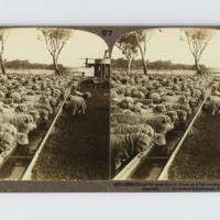 https://repository.erc.monash.edu/files/upload/Rare-Books/Stereographs/Aust-NZ/anz-065.jpg